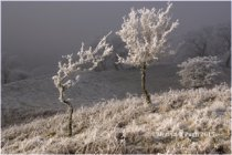 Hoare Frost Brecon Beacons